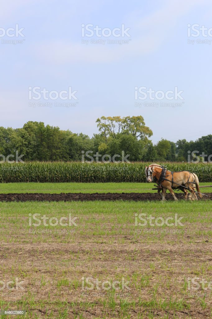 Horses Ploughing stock photo