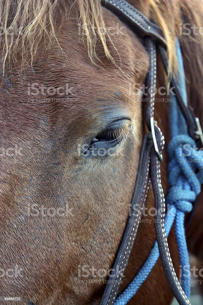 Horse's Point of View royalty-free stock photo