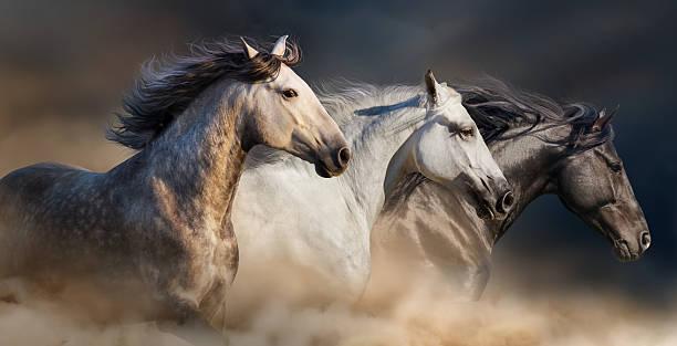 Horses portrait in dust picture id523243714?b=1&k=6&m=523243714&s=612x612&w=0&h=7f022pmx5mhv8pdjrpghax47u0rtrxvcjvts2lvtsli=