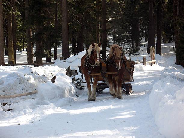 Horses Pulling Sleigh stock photo