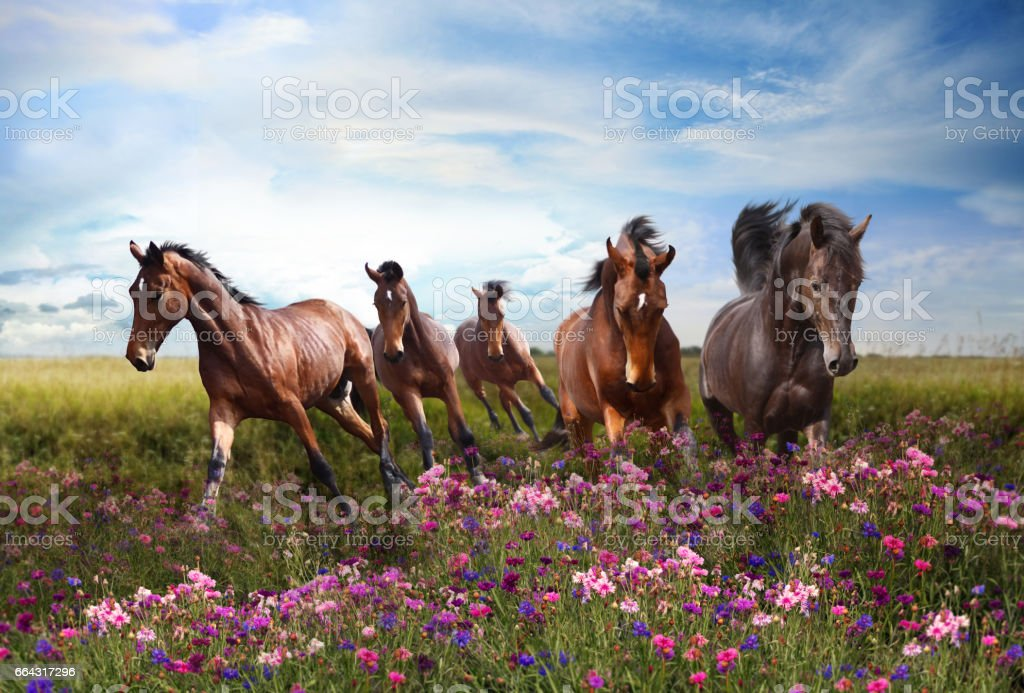 Horses quickly jump on a flowering meadow stock photo