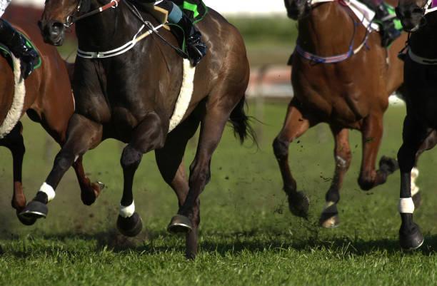 Horses racing on turf picture id182860656?b=1&k=6&m=182860656&s=612x612&w=0&h=lt6n0oj3lmpanilyjrragvo aezauzik506gf46d1vm=