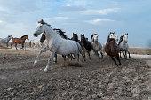istock horses riding freely 1188428167