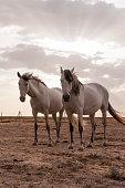 istock horses riding freely 1188428169