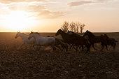 istock horses riding freely 1188428171