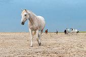 istock horses riding freely 1188428172