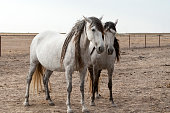 istock horses riding freely 1188428176