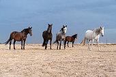istock horses riding freely 1188428178
