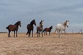 istock horses riding freely 1188428180