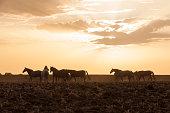 istock horses riding freely 1188428181