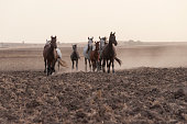 istock horses riding freely 1188428191