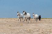 istock horses riding freely 1188428196