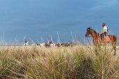 istock horses riding freely 1188428197