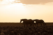 istock horses riding freely 1188428200