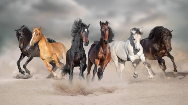 Horses run in sand picture id1072271486?b=1&k=6&m=1072271486&s=612x612&w=0&h=nuziddyccmmoq2zx ah2xsnyfsiz1w lyooxnejzgb0=