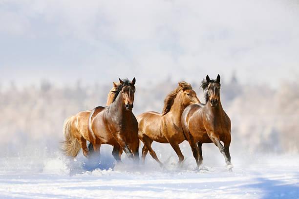 corsa di cavalli - fauna selvatica foto e immagini stock