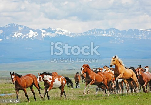 Colorful horses are jumping a small ditch and making a big splash. Rocky Mountains in the background.