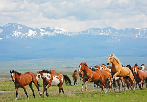Horses Running and Jumping in the Rocky Mountains
