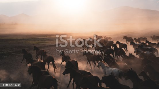 istock Horses running and kicking up dust. Yilki horses in Kayseri Turkey are wild horses with no owners 1189291408