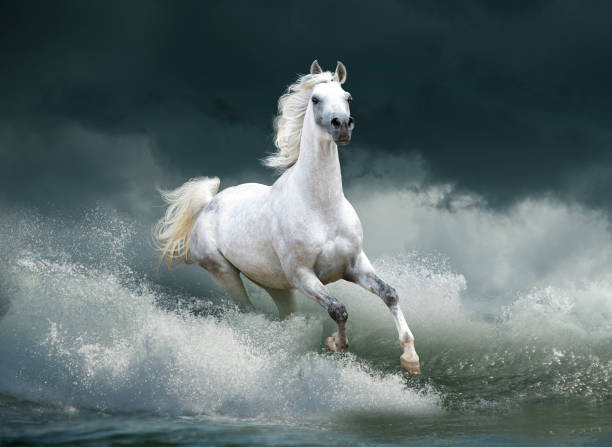 horses running free horses running free in the wild arabian horse stock pictures, royalty-free photos & images