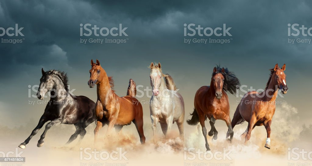 horses running free stock photo