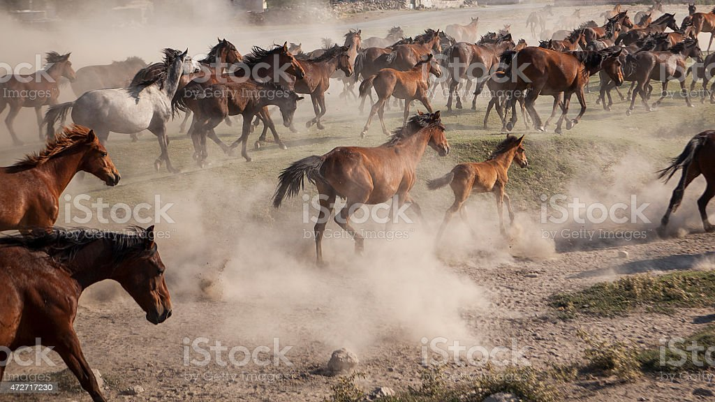 Horses Running in Cloud of Dust – Stock Image stock photo