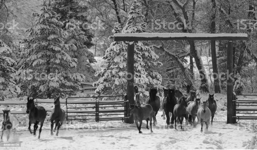 Horses running on the ranch in Montana USA 02 stock photo