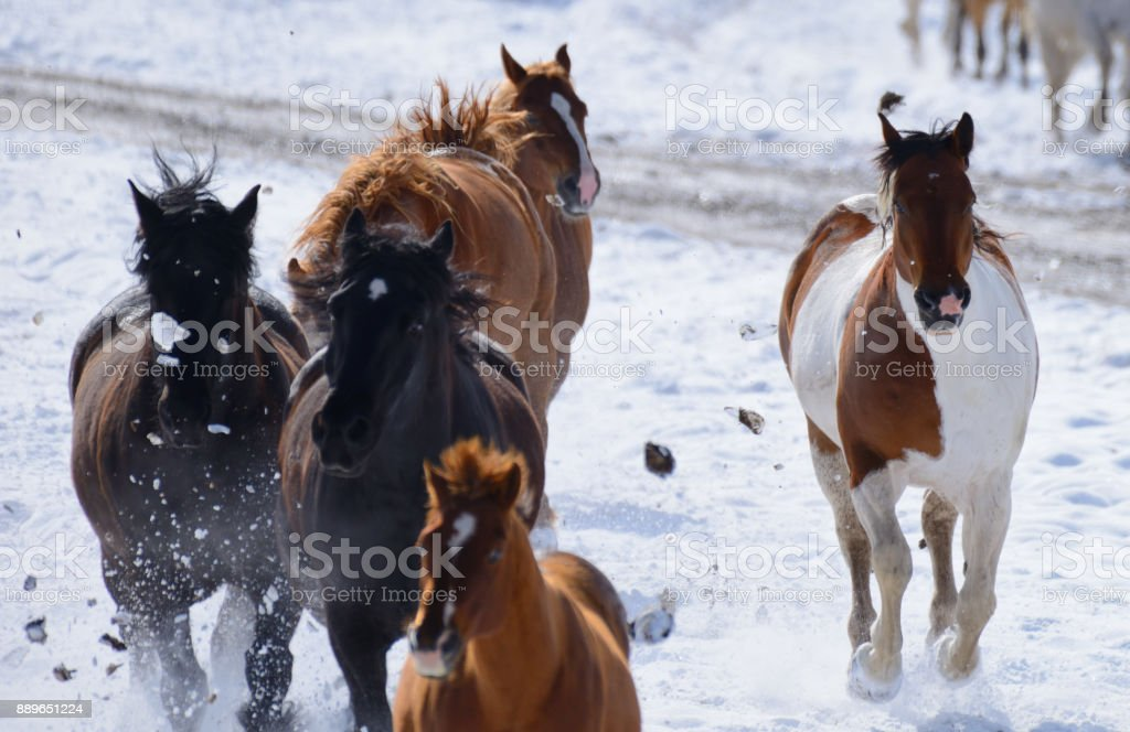 Horses running on the ranch in Montana USA 04 stock photo