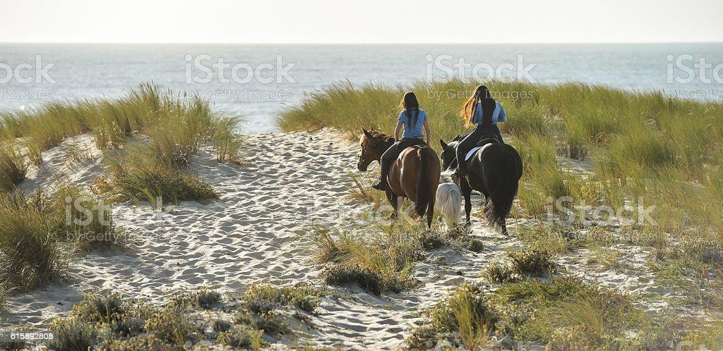Horses running on the sand dunes near the Atlantic Ocean stock photo