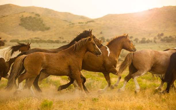 Horses Running stock photo