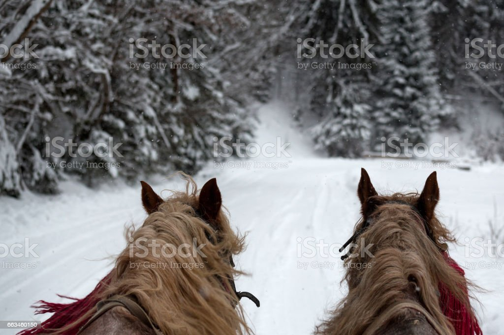 horses running  with the winter sleigh on the road stock photo