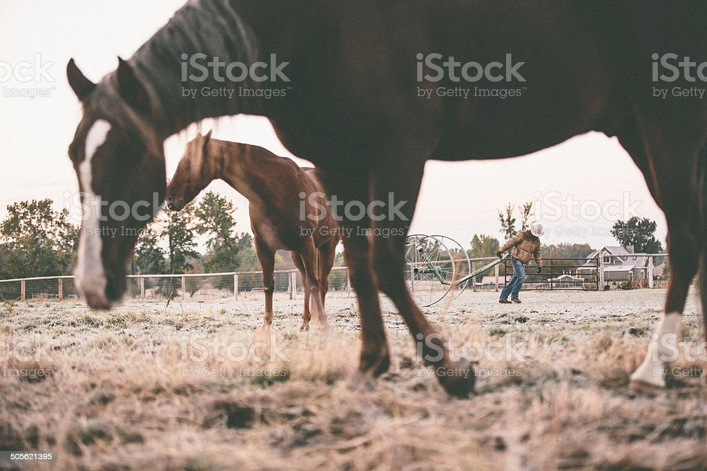 Horses stand in field while man pulls farm equipment royalty-free stock photo