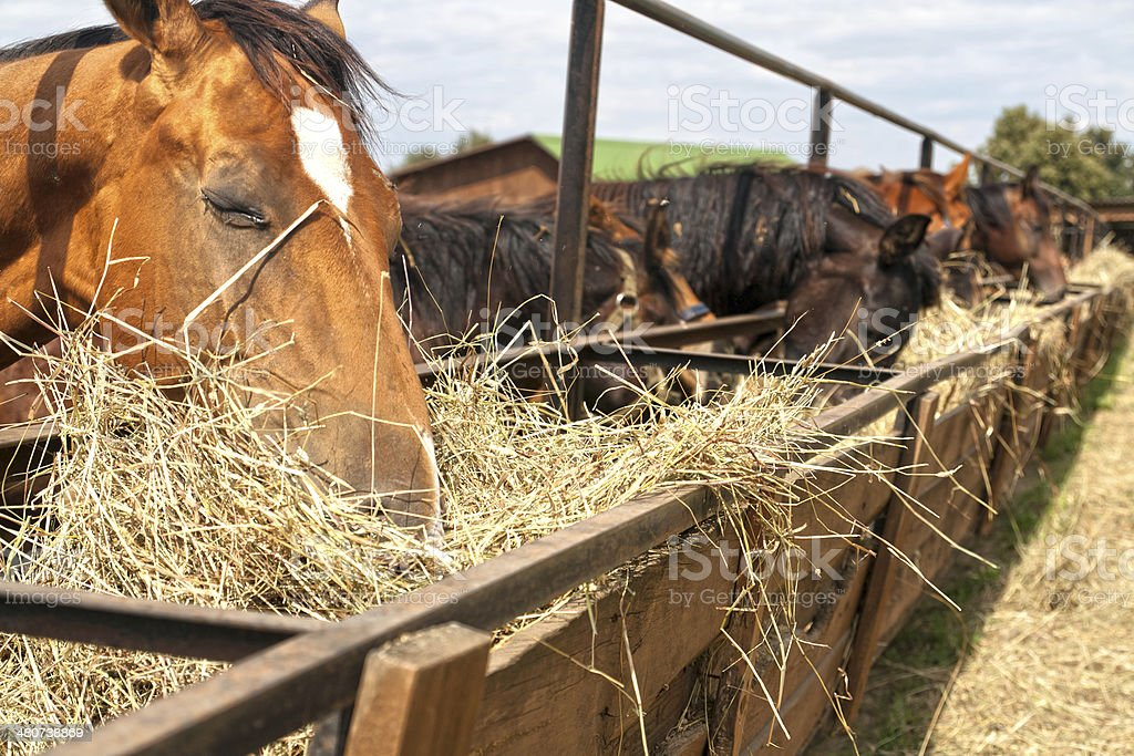 horses standing in a stall at the farm and eat stock photo