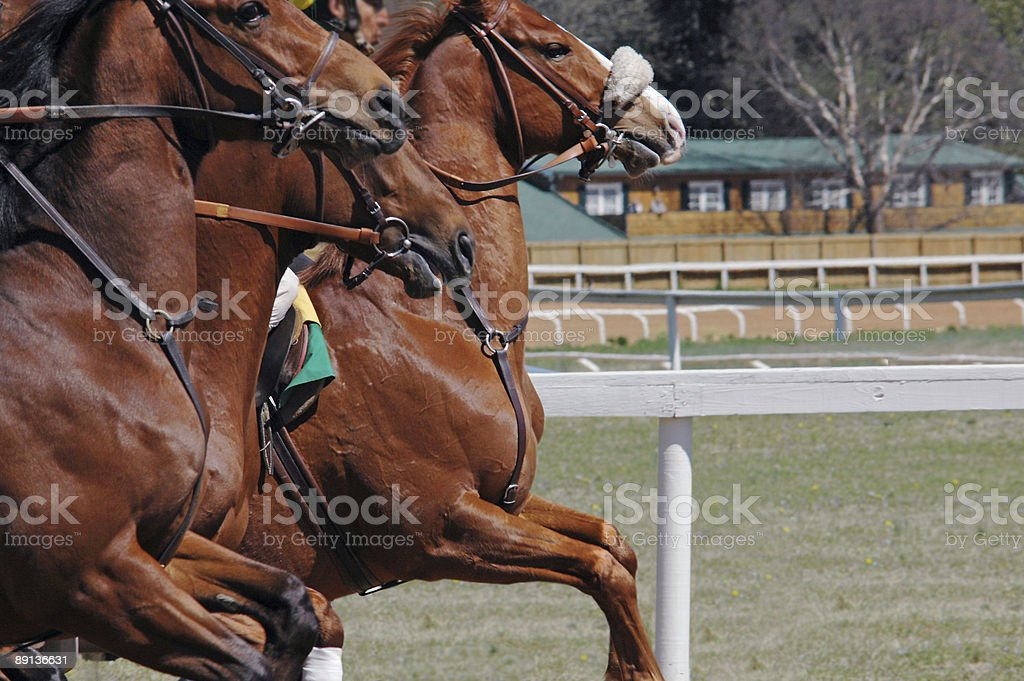 Horses take off at the races stock photo
