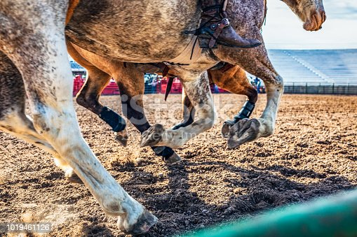 Close-up as two horses gallop by the edge of a rodeo arena in Utah, USA.