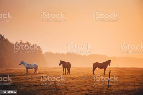 Photo of Horses together in orange autumn morning mist