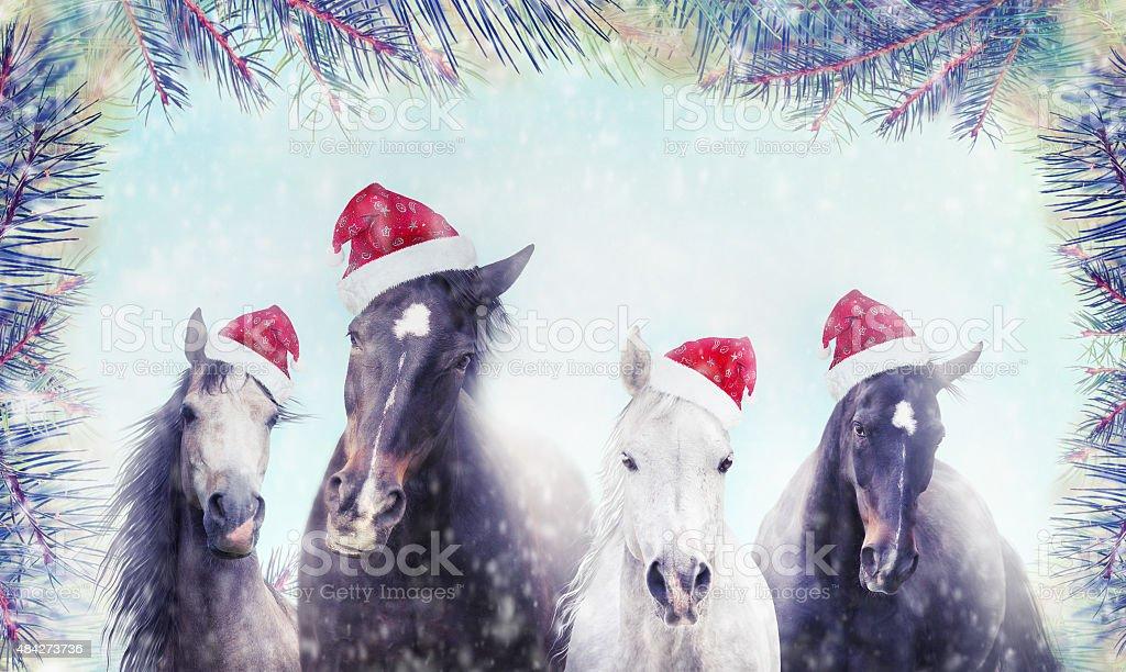 Immagini Di Natale Con Cavalli.Cavalli Con Babbo Natale Cappello Sulla Neve E Albero Di