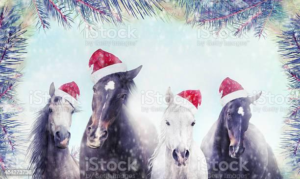 Horses with santa hat on snow and christmas tree background picture id484273736?b=1&k=6&m=484273736&s=612x612&h=1xjczema3mpchjfcjvrvxcl02egumw79w ixs6zlkvm=