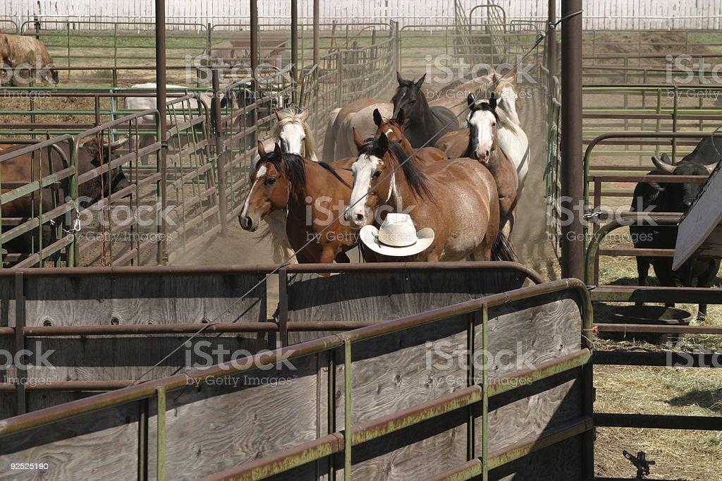 Horses-1 royalty-free stock photo