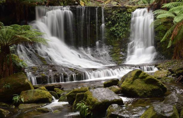 horseshoe falls, mount field national park, tasmania - заповедник дикой природы стоковые фото и изображения