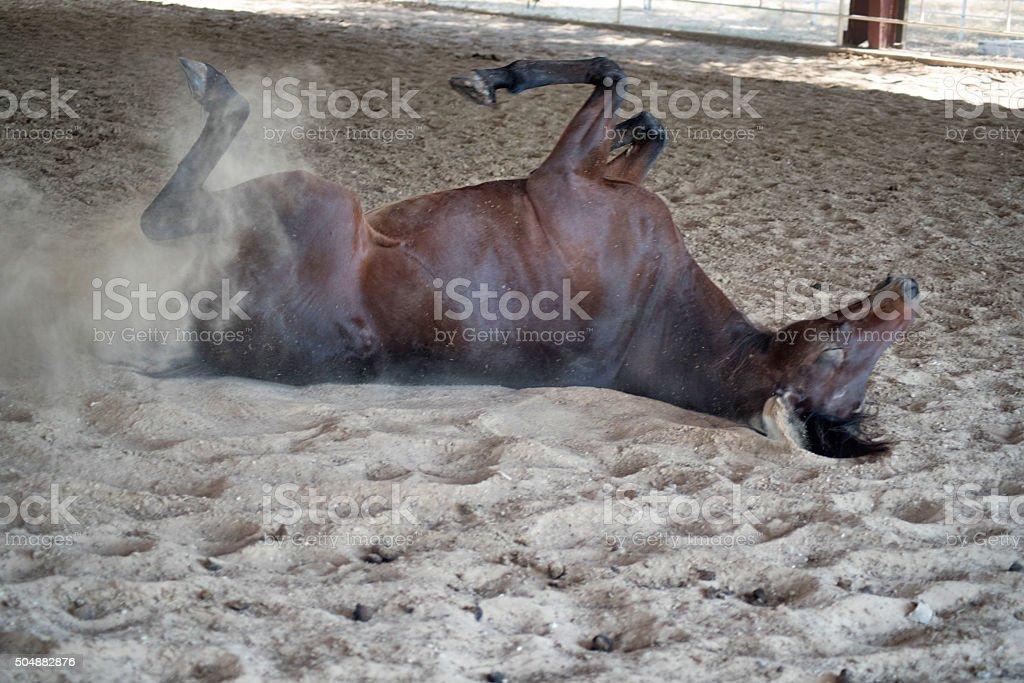 Horsing around in the dirt stock photo