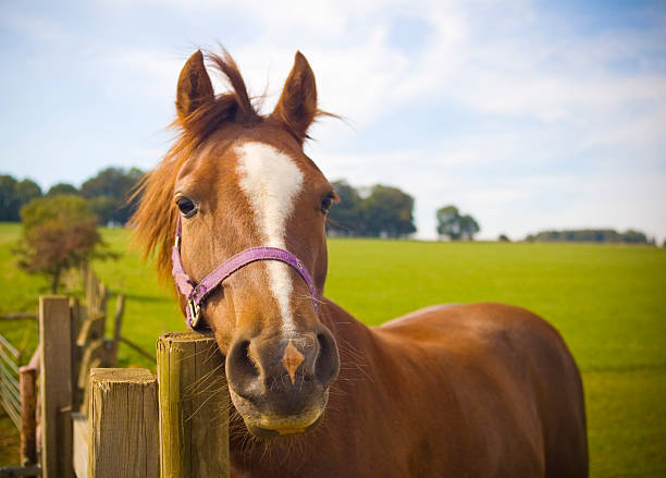 Horsing around  paddock stock pictures, royalty-free photos & images