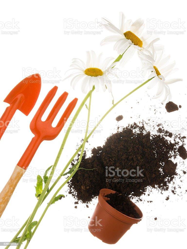 Horticultura Naturaleza muerta sobre un fondo blanco foto de stock libre de derechos