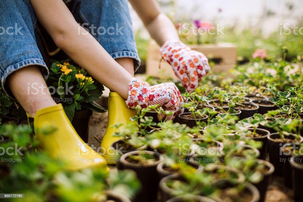 Tuinbouw In de praktijk - Royalty-free Arbeider Stockfoto