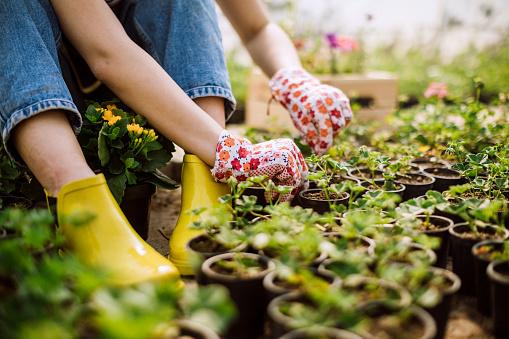 Tuinbouw In De Praktijk Stockfoto en meer beelden van Arbeider