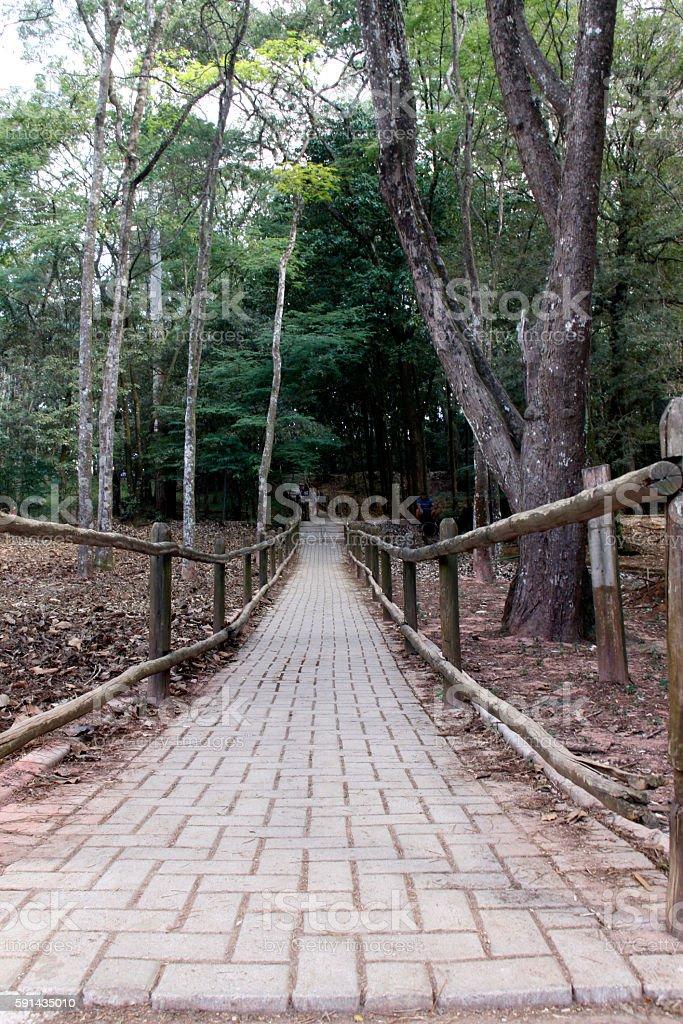 Horto Florestal (garden forest) - São Paulo stock photo