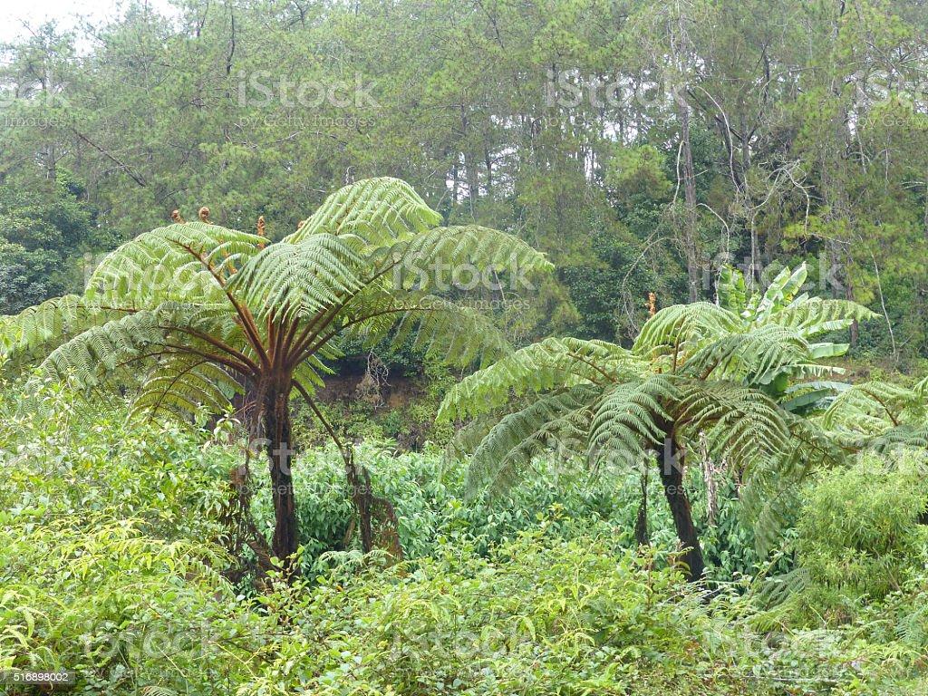 Horton Plains- Unesco world heritage stock photo