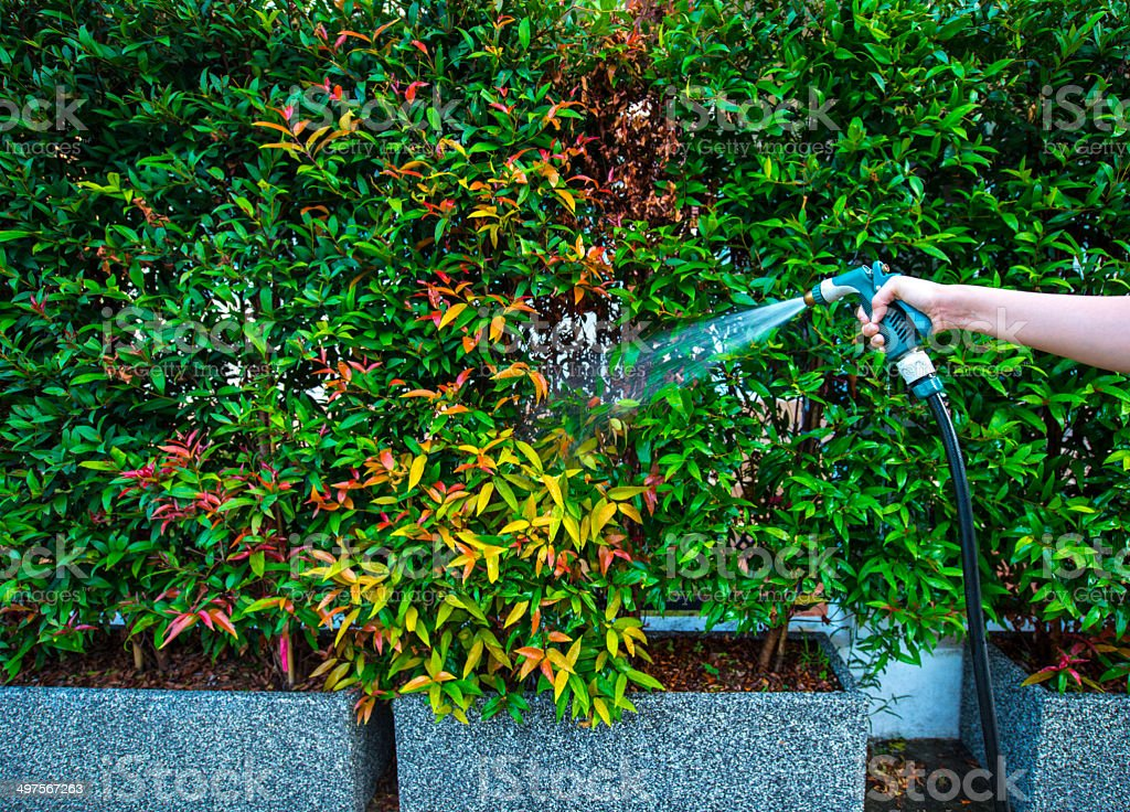 Hose nozzle spraying water on plants outdoors stock photo