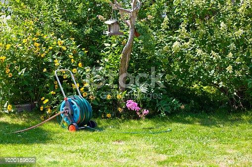 hosepipe reel in the beautiful, green garden bathed in sunlight