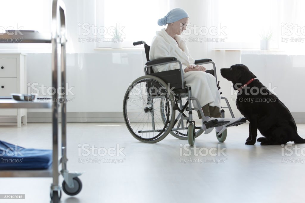 Hospital patient at pet therapy stock photo